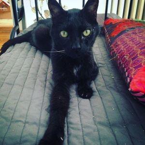 Schwarze Katze auf Sofa
