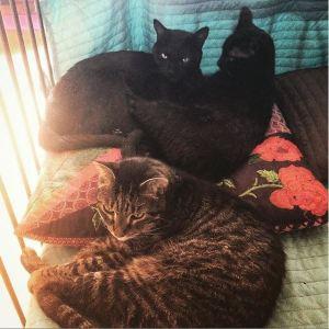 drei Katzen auf einem Sofa